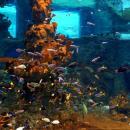Sensacyjne ryby wewrocławskim zoo