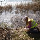 AKCJA ŻABA - przyrodnicy ratują płazy