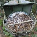 W lesie pod Żmigrodem wylęgły się sokoły wędrowne