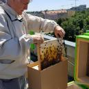 12 tys. pszczół na dachu Dolnośląskiego Urzędu Wojewódzkiego