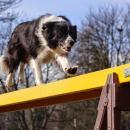 Psy zawładną Partynicami - przed nami IV Halowe Zawody Agility