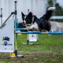 Psy opanują Partynice - wnajbliższy weekend zawody agility