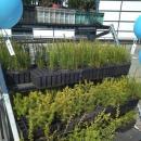Ponad 2 tys. sadzonek za makulaturę oraz elektroodpady