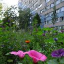 Miejskie łąki zakwitły