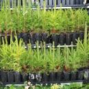 2 000 drzewek za makulaturę ielektrośmieci