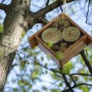 Domki dla owadów na Partynicach