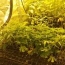 Przeobraził garaż wplantację marihuany