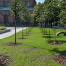 Nowa zielona przestrzeń weWrocławiu - na tyłach Muzeum Architektury