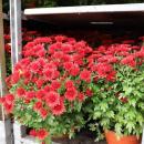 Powiat kupił kwiaty – wgeście solidarności