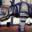 Nosorożec indyjski przy wrocławskim Rynku